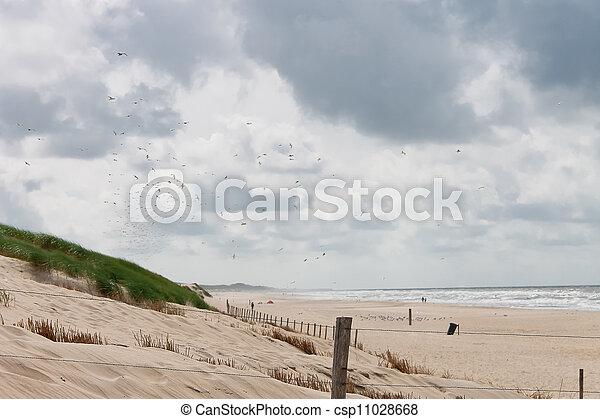 Summer beach in the Netherlands - csp11028668