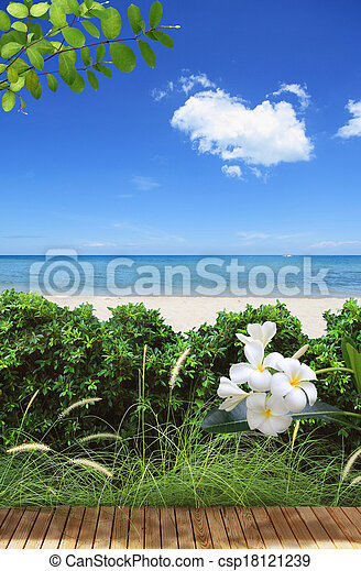 summer beach - csp18121239
