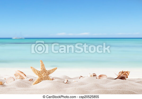 Summer beach with strafish and shells - csp20525855