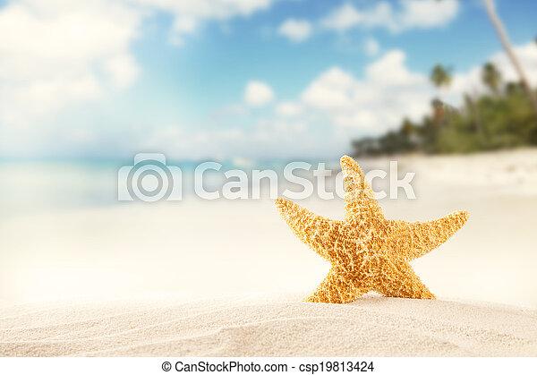 Summer beach with strafish - csp19813424