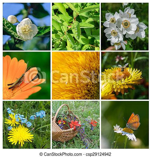Summer Collage - csp29124942