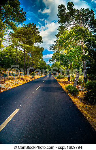 Summer Country Road With Trees. - csp51609794