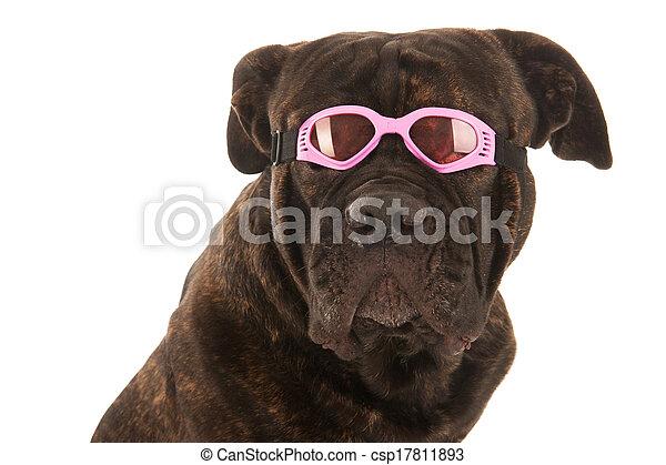 Summer dog - csp17811893