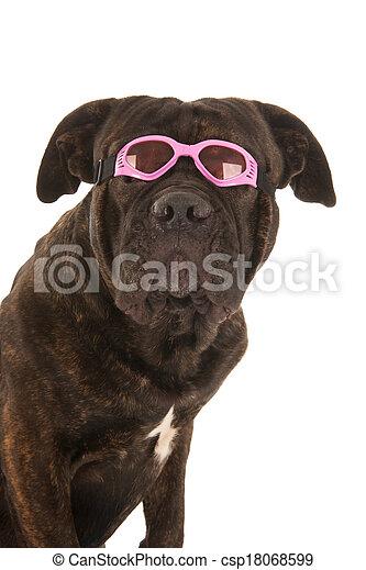 Summer dog - csp18068599