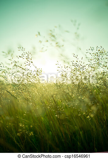 Summer Dry Grass - csp16546961
