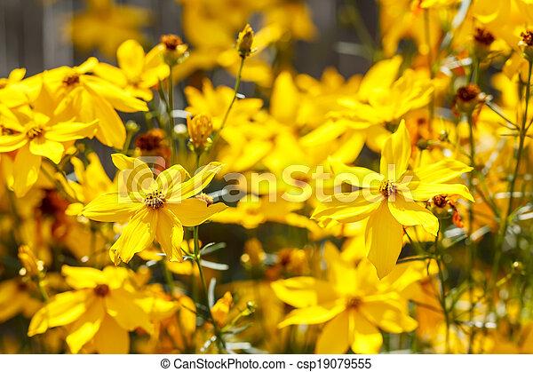 summer flower in garden - csp19079555