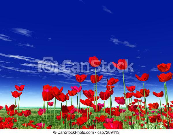 Summer flowers poppies poppy field summer flowers poppies csp7289413 mightylinksfo