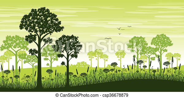 Summer forest - csp36678879