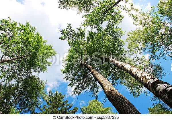 Summer forest - csp5387335