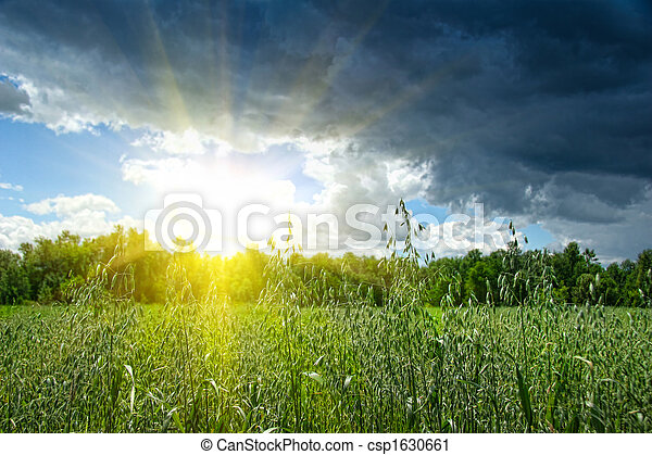 Summer grain growing in a farm field - csp1630661