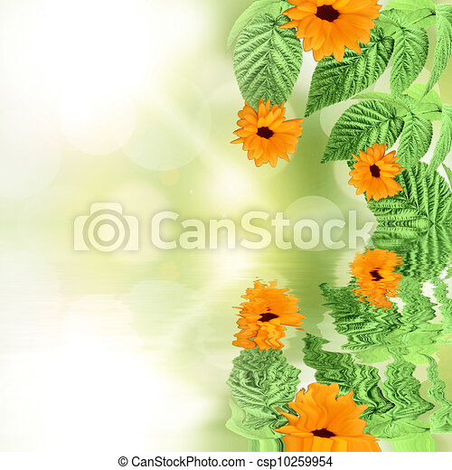Summer Green backgroundwith flowers reflected in water - csp10259954