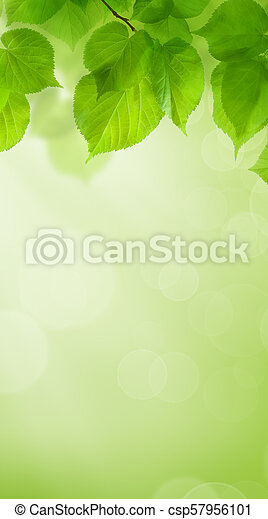 Summer Green Wallpaper Background with Leaves - csp57956101