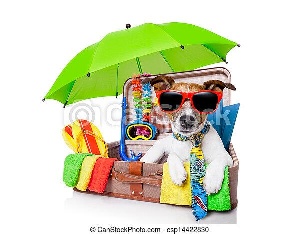 summer holiday dog - csp14422830
