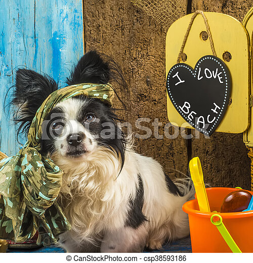 Summer holidays funny dog - csp38593186