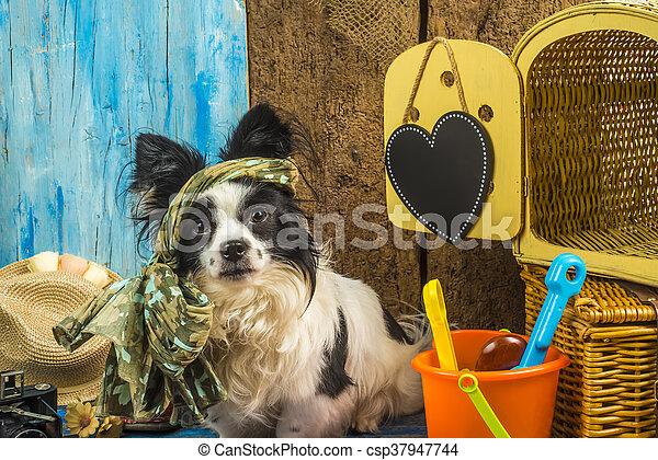 Summer holidays funny dog - csp37947744