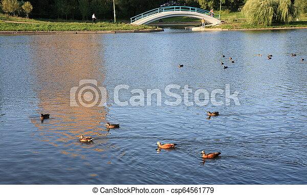 summer in city park - csp64561779