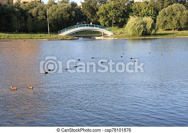 summer in city park - csp78101876