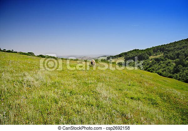 Summer in mountains - csp2692158