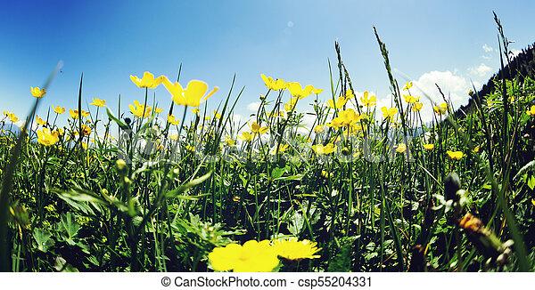 Summer Landscape Background With Fresh Yellow Flowers On Grassland