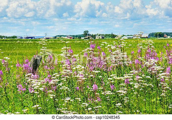 Summer landscape in rural Canada - csp10248345