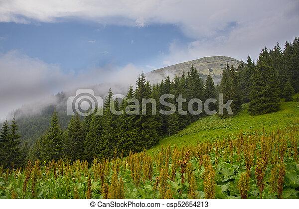 Summer landscape in the Carpathian mountains - csp52654213