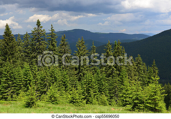 Summer landscape in the Carpathian mountains - csp55696050