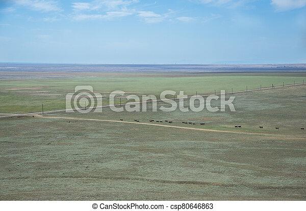 Summer landscape in the steppe Crimea - csp80646863