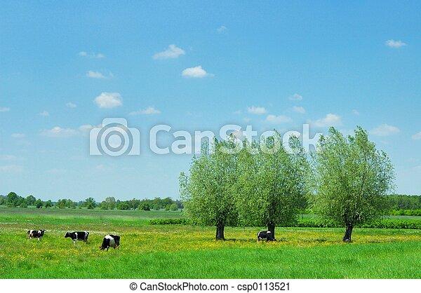 Summer Landscape - csp0113521