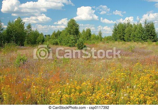Summer Landscape - csp0117392