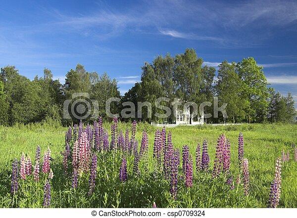 Summer Landscape - csp0709324