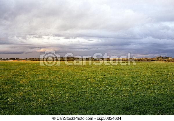 summer landscape - csp50824604