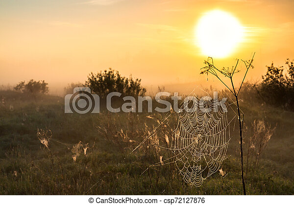 summer landscape with sunrise and fog - csp72127876