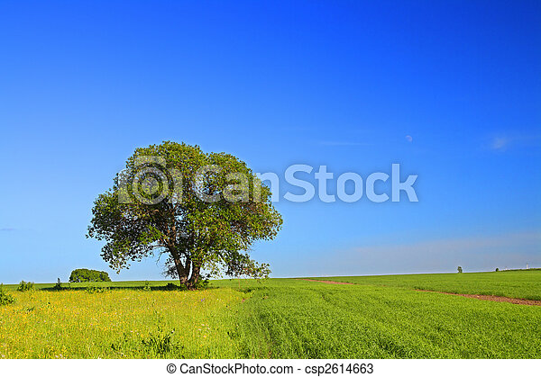 summer landscape with tree - csp2614663