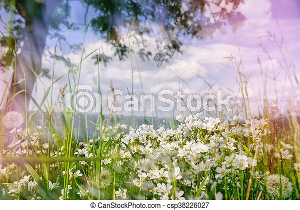 Summer landscape with wild white flowers nature background summer landscape with wild white flowers csp38226027 mightylinksfo