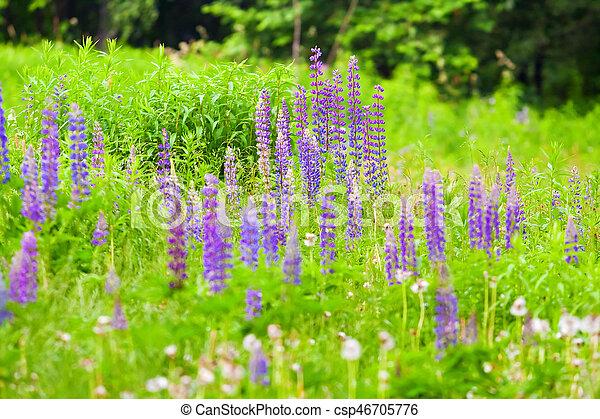 summer meadow in flowers - csp46705776