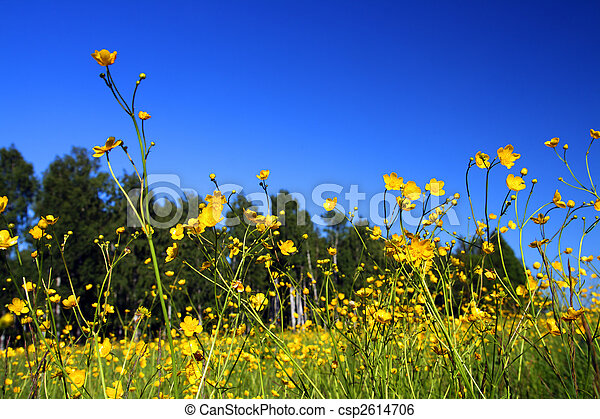 summer meadow with flowers - csp2614706