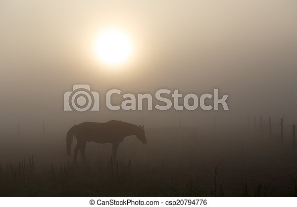 Summer morning mystery with horse, fog and sunrise - csp20794776