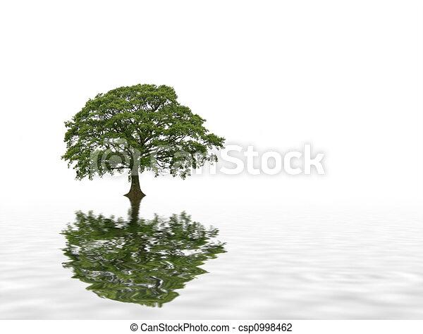 Summer Oak Tree Abstract - csp0998462