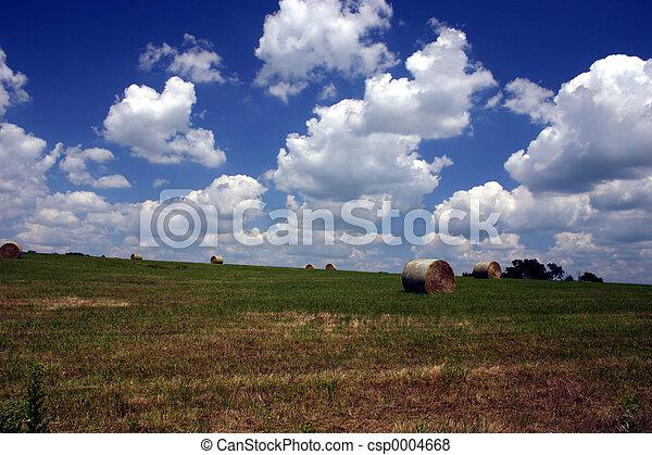 Summer on the farm - csp0004668