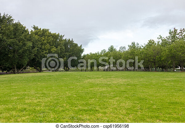 Summer scene with green grass. Surrounded by trees on a cloudy day. - csp61956198