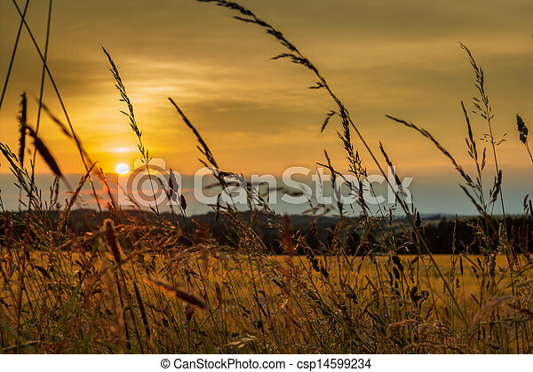 summer sunset over grass field - csp14599234