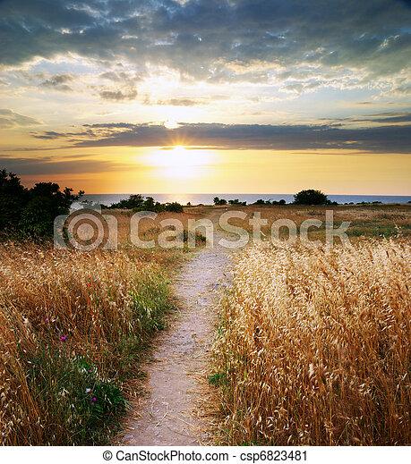 Summer sunset. - csp6823481