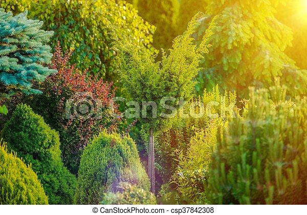 Summer Sunshine in the Garden - csp37842308