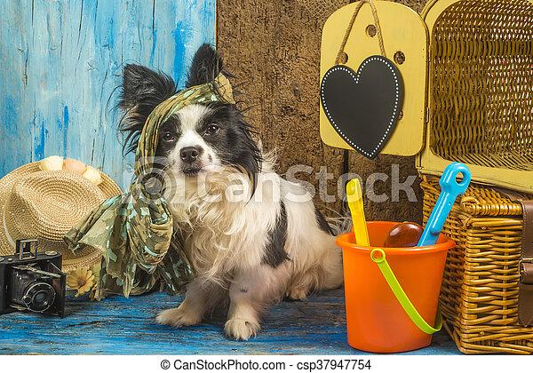 Summer Vacations Funny Dog