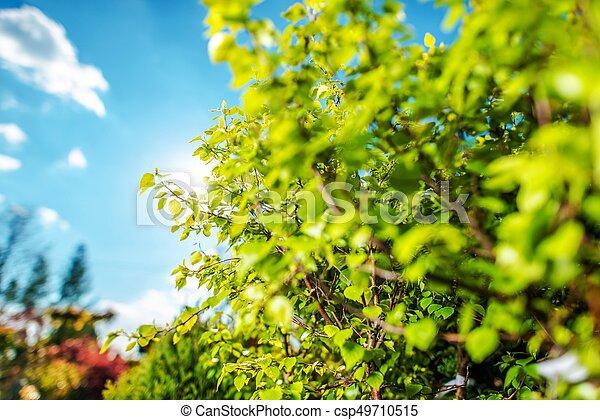 Summer Vegetation in Garden - csp49710515