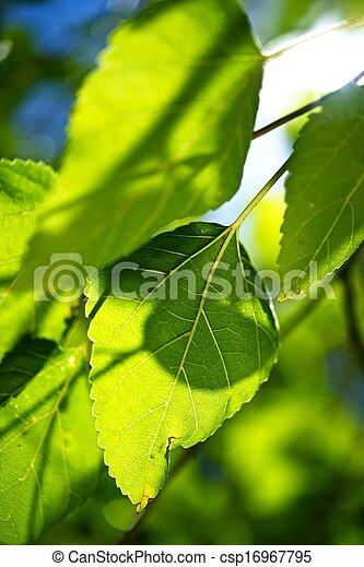 Summer Vegetation - csp16967795