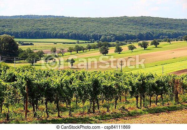 Summer vineyard landscape - csp84111869