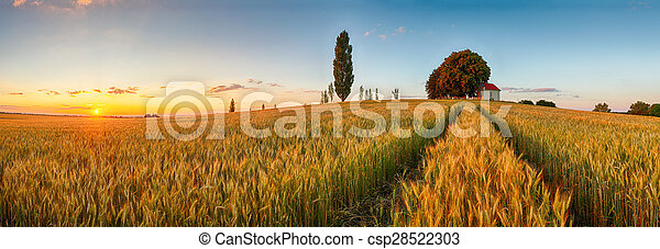 Summer wheat field panorama countryside, Agriculture - csp28522303