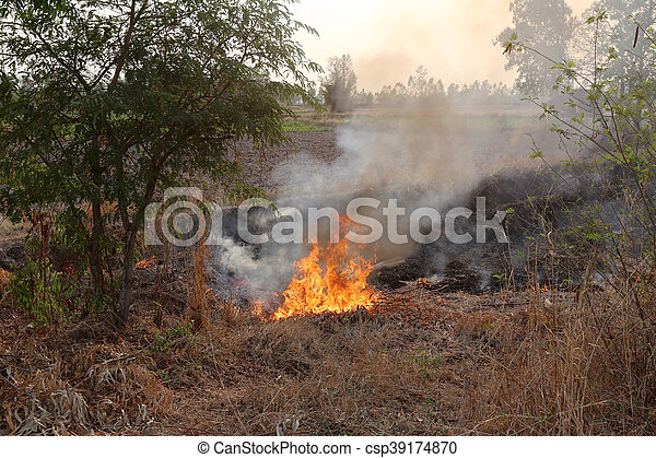 Summer wildfires burning in the Forest at rural area of Khon Kaen,Thailand