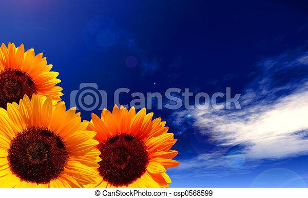sun flowers - csp0568599